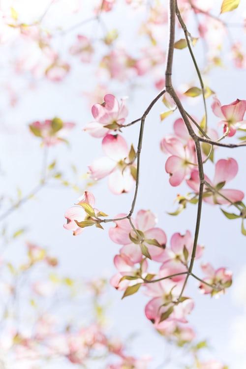 Une image contenant fleur, fruit  Description générée automatiquement